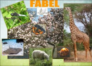 IMPRESSIE van 'mijn' DIERENBOSmeteigen foto's : Magnolia, Schaap, Lieveheersbeestjerechtenvrije foto's: Giraffe, Stekelrog, Duiffoto's van Nynke van Gurp-Smilde: Libelle, Vlinder