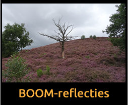 BOOM-Reflecties_nl
